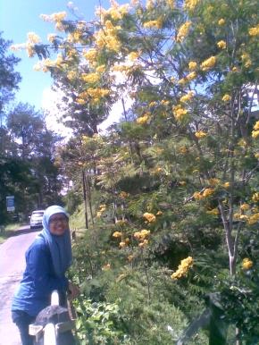 Yellow Sakura @luckylhap