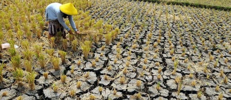 Tanah pecah pecah mengumpal