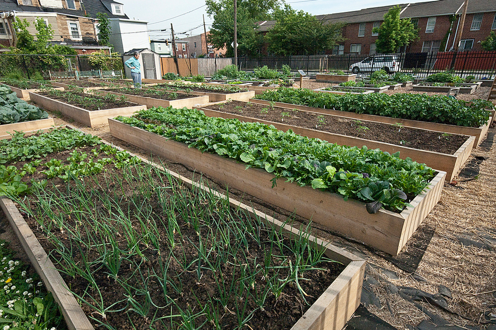 Larger urban farming