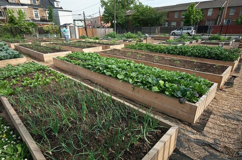 Larger urban farming